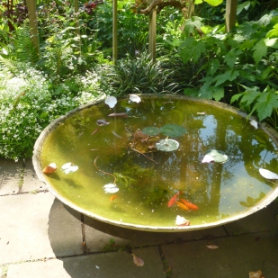 Peter Beardsley's Garden fishbowl