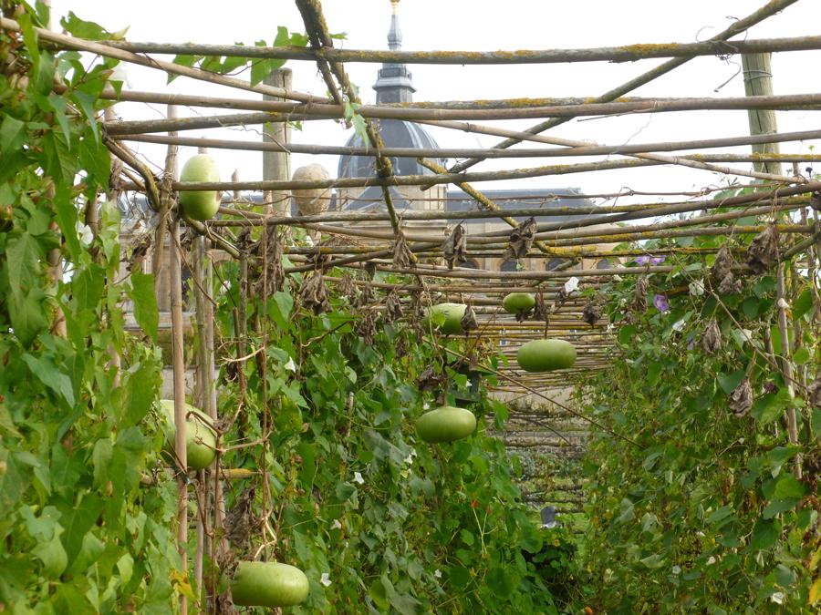 Potager du roi, Versailles France - Gourds