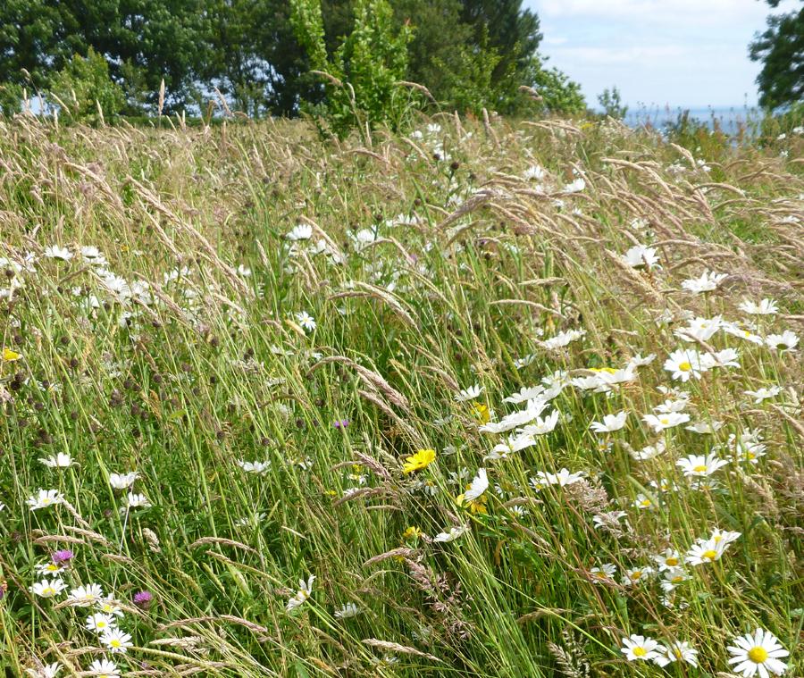 Meadow - Dan Pearson