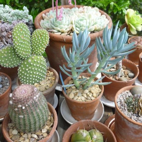 Peter Beardsley's Garden Succulents