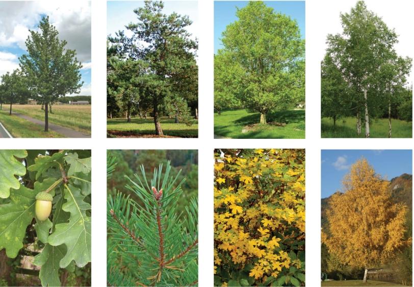 arbres-haut-tiges-copie2