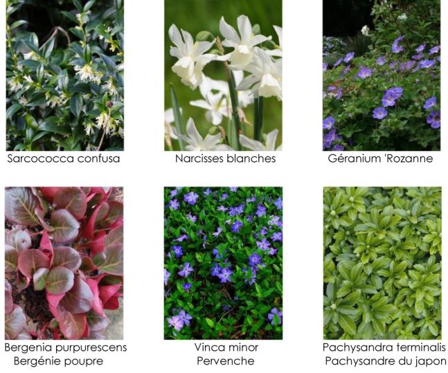 plantes-couvre-sols